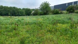 Baildon Floodable Meadow