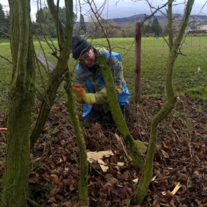 A man hedge laying