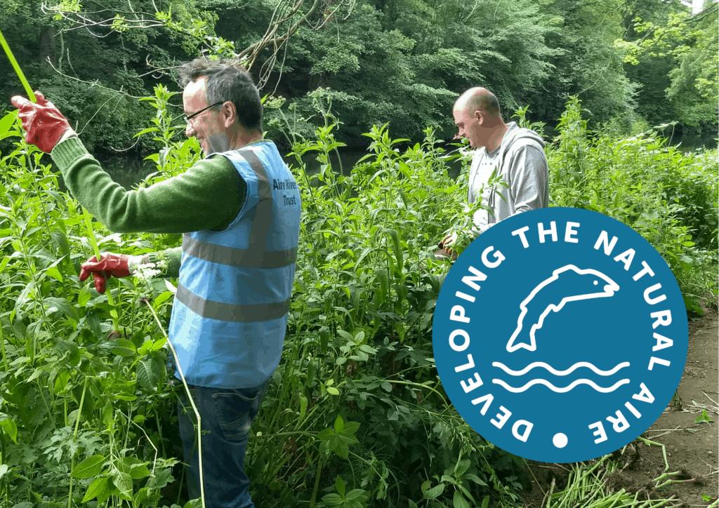 Volunteers pulling up balsam plants